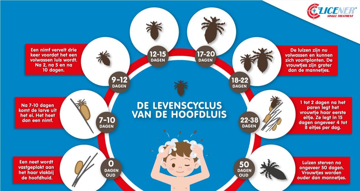 De levenscyclus van de hoofdluis